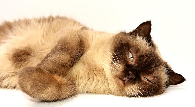寝そべっている猫の画像