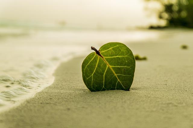 海辺でリラックス